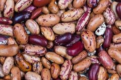Röd och beige bönamodell som bakgrund Royaltyfri Foto