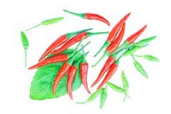 Röd och grön chili som isoleras på på vit Arkivfoto