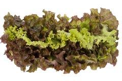 Röd och grön grönsallat Royaltyfri Fotografi