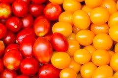 Röd och gul körsbärsröd tomat Royaltyfri Fotografi