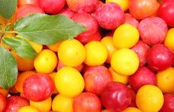 Röd och gul mirabelle och gräsplanblad Arkivfoton