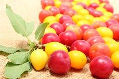 Röd och gul mirabelle och gräsplanblad på jutekanfas Royaltyfri Fotografi