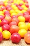 Röd och gul mirabelle på jutekanfas Royaltyfria Bilder