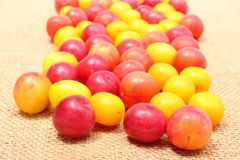 Röd och gul mirabelle på jutekanfas Arkivfoton