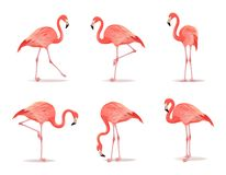 Röd och rosa flamingouppsättning, vektorillustration Den kalla exotiska fågeln i olikt poserar dekorativa designbeståndsdelar royaltyfri illustrationer