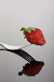 Röd och våt jordgubbe på en form med reflexion på skinande surfac Royaltyfria Foton