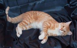 Röd-och-vit katt som ligger med en ledsen blick Arkivfoto