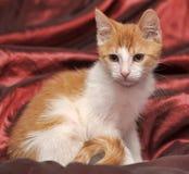 Röd och vit kattunge Arkivbild