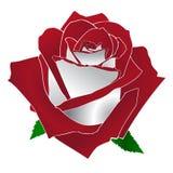 Röd och vit ros Arkivfoto