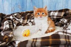 Röd orange kattunge på blått trä Royaltyfri Bild