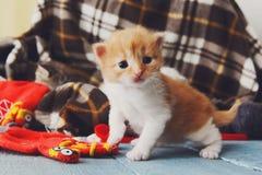 Röd orange nyfödd kattunge i en plädfilt Fotografering för Bildbyråer
