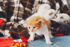 Röd orange nyfödd kattunge i en plädfilt Arkivfoton
