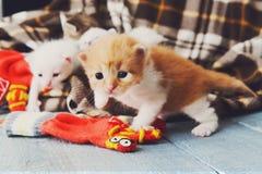 Röd orange nyfödd kattunge i en plädfilt Royaltyfria Bilder