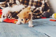 Röd orange nyfödd kattunge i en plädfilt Royaltyfri Fotografi