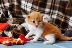 Röd orange nyfödd kattunge i en plädfilt Royaltyfri Foto