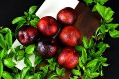 Röd ordning för plommon 6 fotografering för bildbyråer