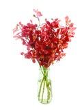 Röd orkidé i den isolerade vasen Royaltyfria Foton