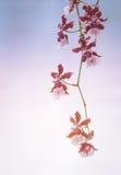 Röd orkidé på mjuk bakgrund Arkivbild