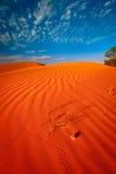 Djur spårar i röd sanddyn Royaltyfri Bild