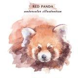 Röd panda för vattenfärg Dragen illustration för löst djur hand stock illustrationer
