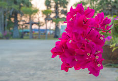 Röd pappers- blomma Fotografering för Bildbyråer