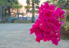 Röd pappers- blomma, djup av fältet arkivfoto