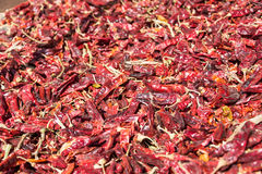 Röd paprika som växer på Betlehem av Galilee Arkivbild