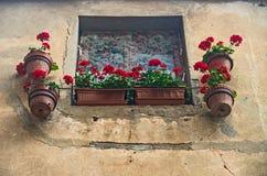 Röd pelargonia Royaltyfria Foton