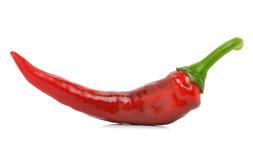 Röd peppar för Chili Royaltyfri Fotografi