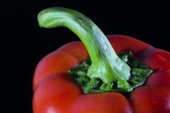 Röd peppar för svett Arkivbilder