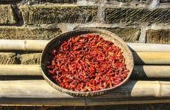 Röd peppar torkas i solen fotografering för bildbyråer