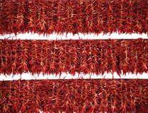 Röd pepparutläggning Arkivfoto