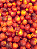 Röd persikabakgrund Royaltyfria Foton