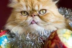 Röd persisk katt med julbollen Royaltyfri Fotografi