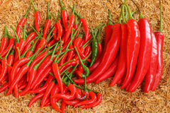 Chili Arkivbild