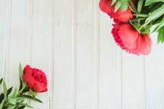 Röd pion för bästa sikt på vit träbakgrund med copyspace Arkivfoto