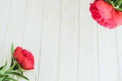 Röd pion för bästa sikt på vit träbakgrund med copyspace Fotografering för Bildbyråer