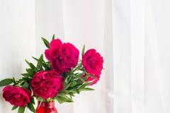 Röd pionbukett på en vit bakgrund med copyspace Royaltyfria Bilder