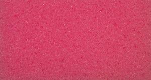 Röd porös textur Texturen av svampen Fotografering för Bildbyråer