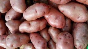 röd potatis arkivbilder