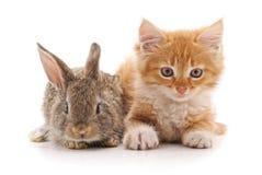 Röd pott och kanin Arkivfoto