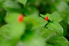 Röd prick på gräsplan Arkivfoto