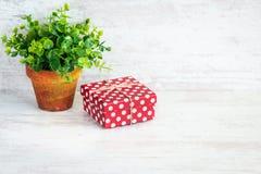 Röd prickig gåvaask och en grön blomma i en lantlig keramisk kruka Vit träbakgrund, kopieringsutrymme Arkivbild
