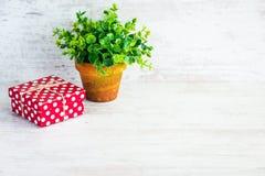 Röd prickig gåvaask och en grön blomma i en lantlig keramisk kruka Vit träbakgrund, kopieringsutrymme Royaltyfria Foton