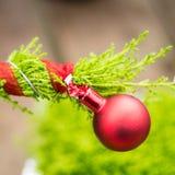 Röd prydnad på evergreen royaltyfri foto