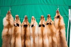 Röd rävpäls Royaltyfri Fotografi