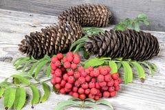Röd rönn med pinecones på trätabellen Arkivbild