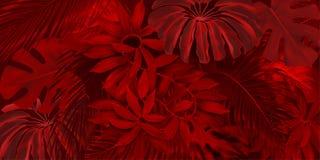 Röd rainforestmodell Fotografering för Bildbyråer
