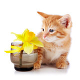 Röd randig kattunge med en gul blomma. Arkivbilder
