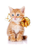 Röd randig kattunge med en guld- pilbåge. Royaltyfria Bilder
